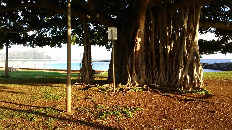 Tree Hawaiian Style